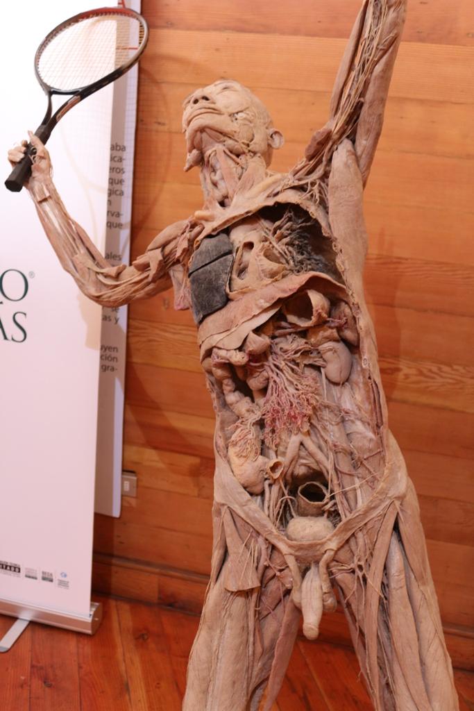 """En Casa de la Cultura de Iquique se presenta exposición """"Bodies ..."""