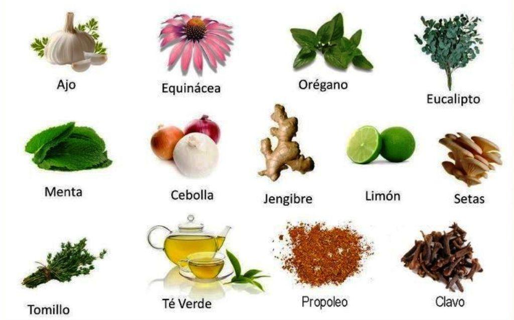 Journal of ethnopharmacology diario el nortino iquique for Hierbas y plantas medicinales